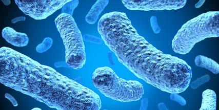 Mikrobiológia